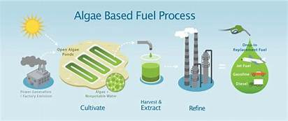 Research Questions: Could Algae be the Next Source of RenewableEnergy?